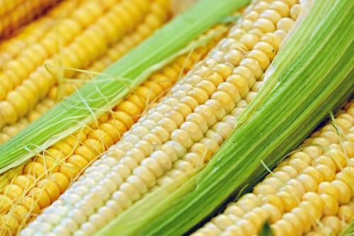 Когда есть кукурузу. Кукуруза: польза