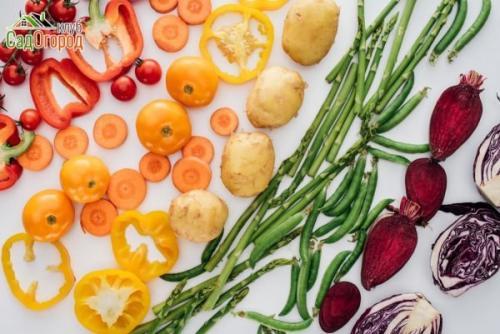 Овощи для похудения. Овощи - минус лишний вес и плюс здоровье